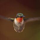 Flight of a Ruby! by Anthony Goldman