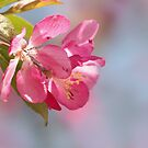 PINK BLOSSOMS by Lori Deiter