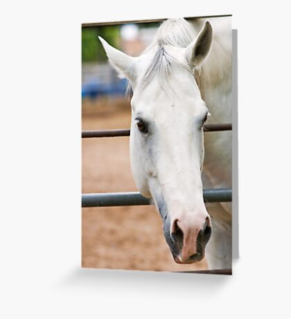 Why the Long Face Greeting Card