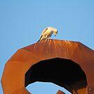 Birdy by kerryward