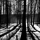 Shadow Lines by peaceofthenorth