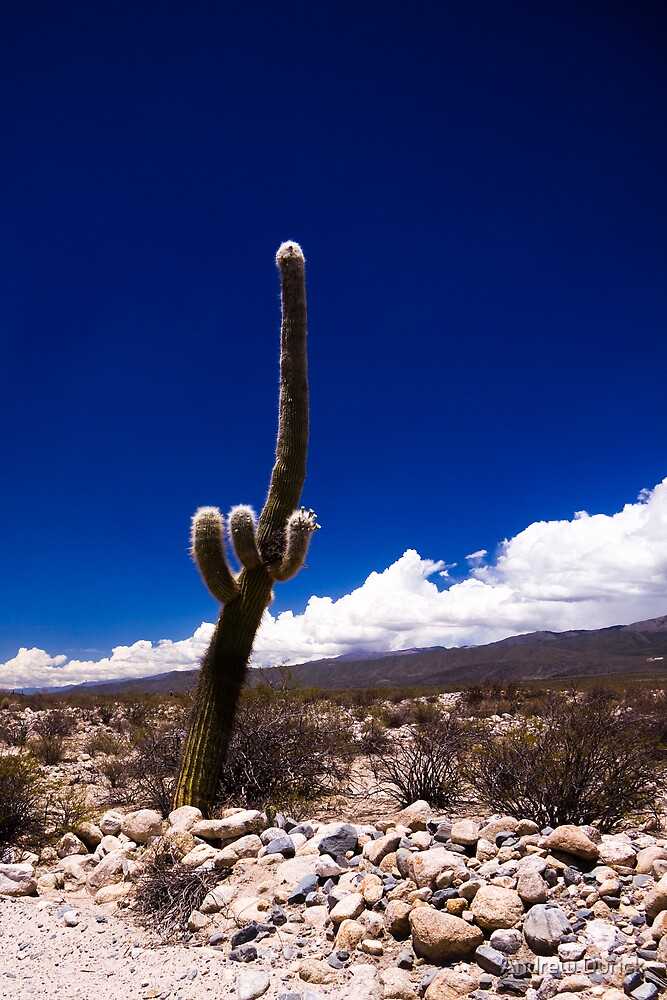Cactus Tall by Andrew Durick
