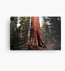 Riesenmammutbaum Metallbild