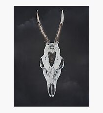 Roe Deer Skull with Death Hawk Moth Photographic Print