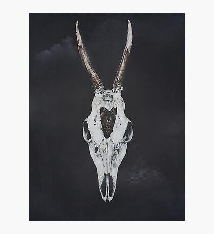 Roe Deer Skull with Death Hawk Moth Photographic Print