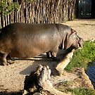 2 Ton Harry the Hippo by Keith Richardson
