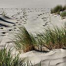 Footprints in the Sands  by Barbara  Brown