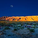 Last Light on The Valley Floor With Wildflowers, Anza Borego by photosbyflood