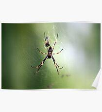 Spider underbelly! Poster
