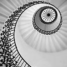 Ammonite by Irina Chuckowree