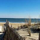 Cape Henlopen, DE - USA by Bine