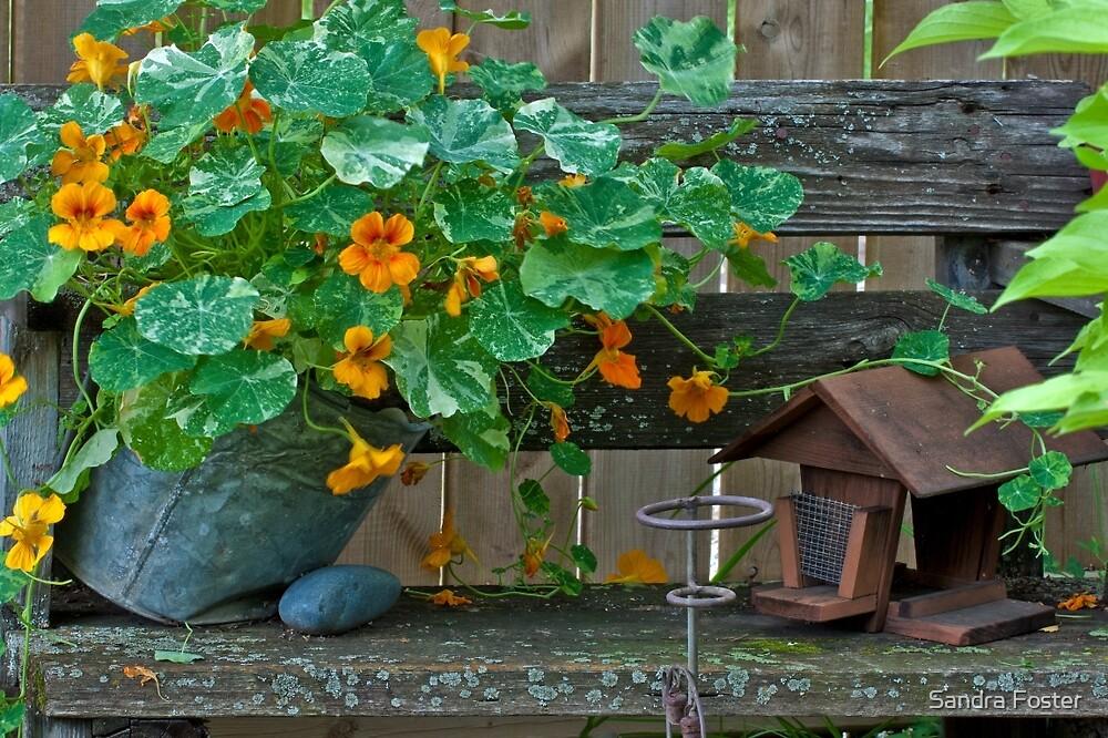 Nasturtiums In The Breeze by Sandra Foster