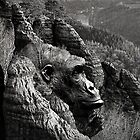 Ape Mountain by © Kira Bodensted