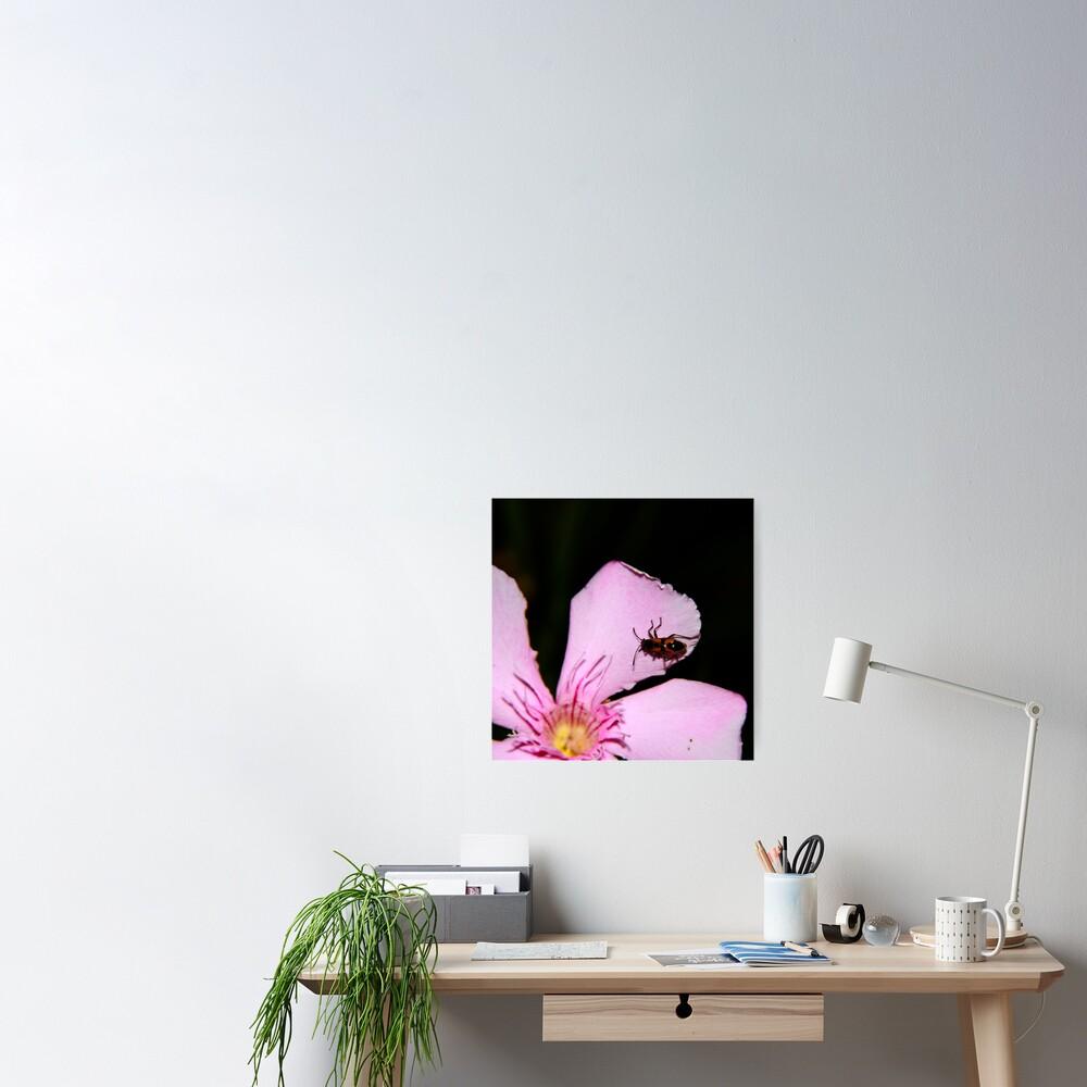 Milkweed Bug Poster