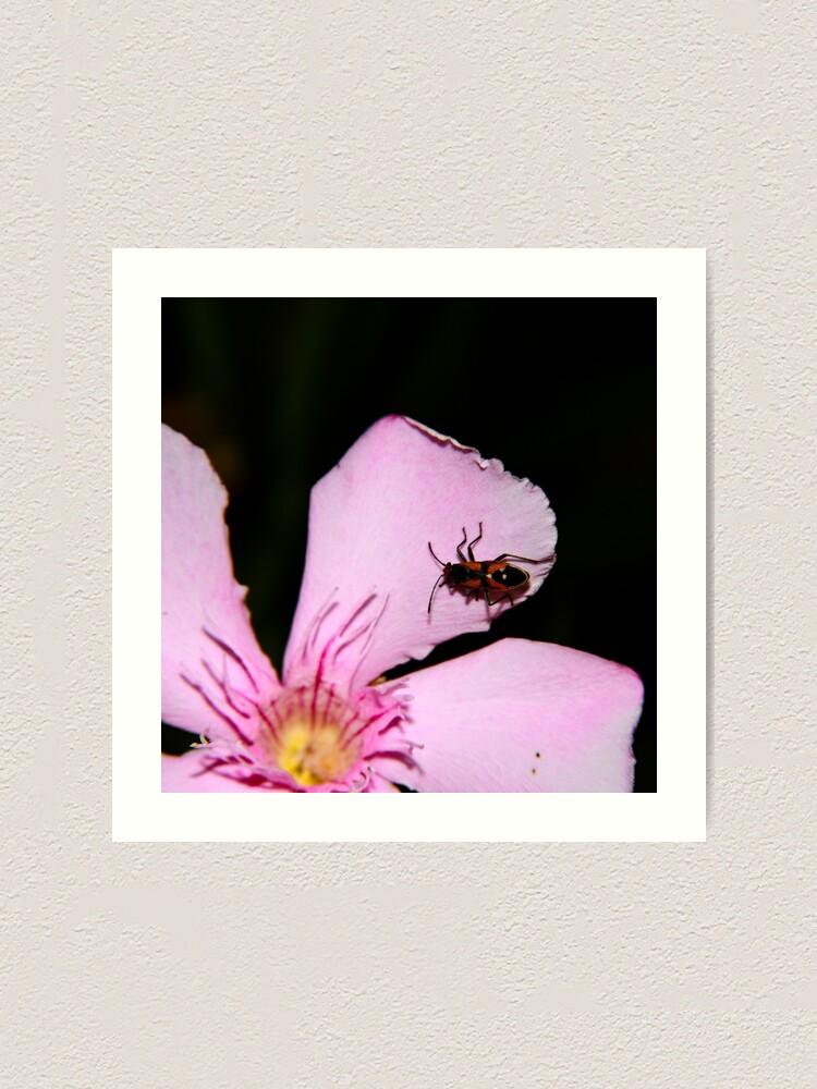 Alternate view of Milkweed Bug Art Print