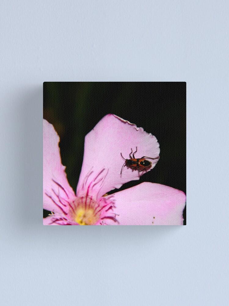 Alternate view of Milkweed Bug Canvas Print