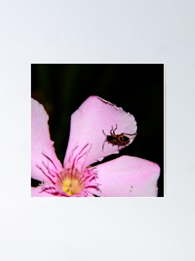 Alternate view of Milkweed Bug Poster