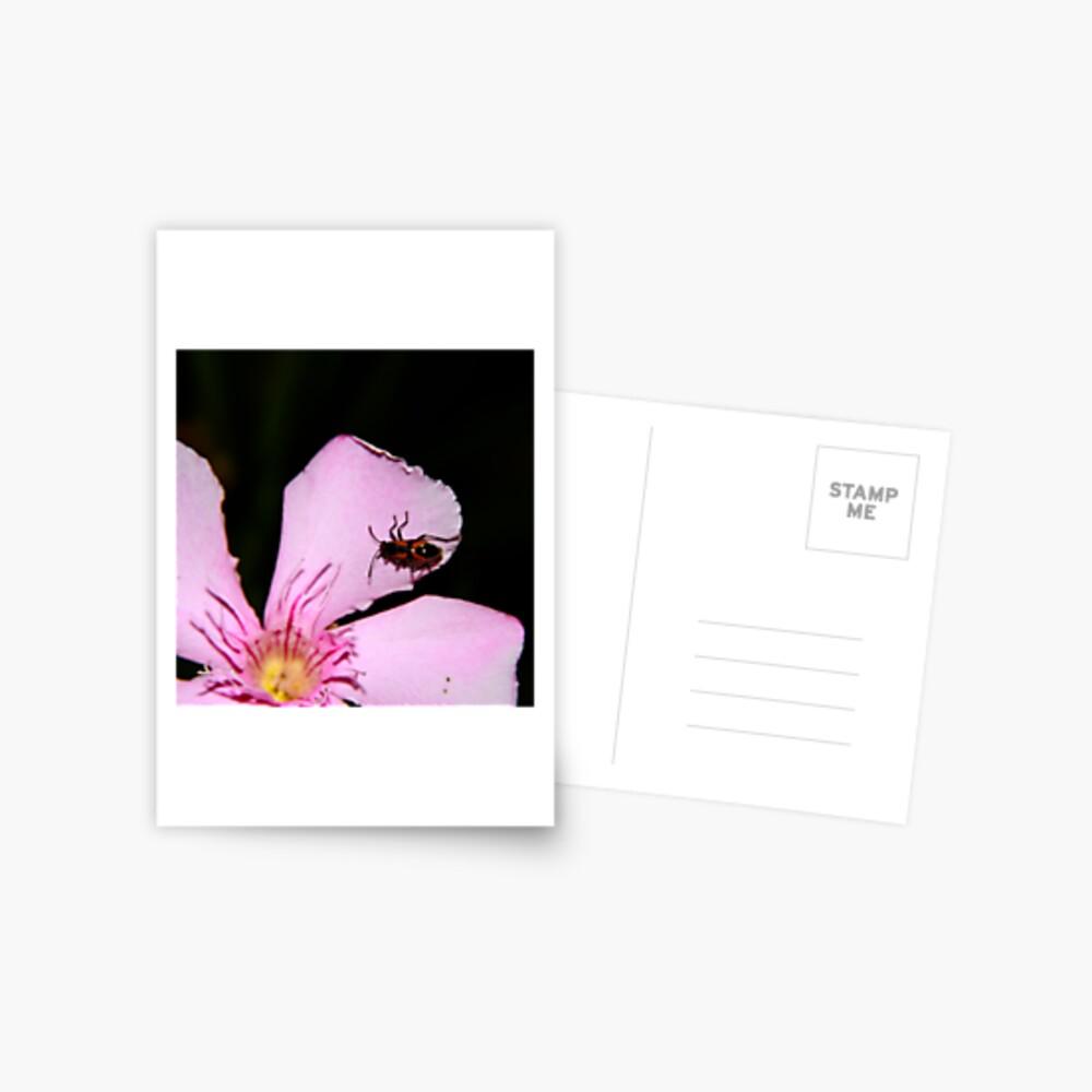 Milkweed Bug Postcard