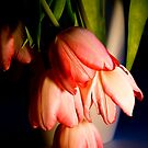 Wilting tulips by mausue