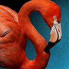 American Flamingo Profile by DebiDalio