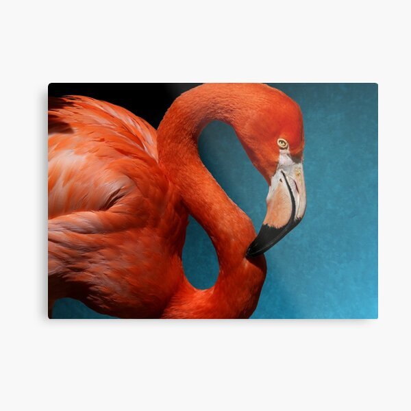 American Flamingo Profile Metal Print