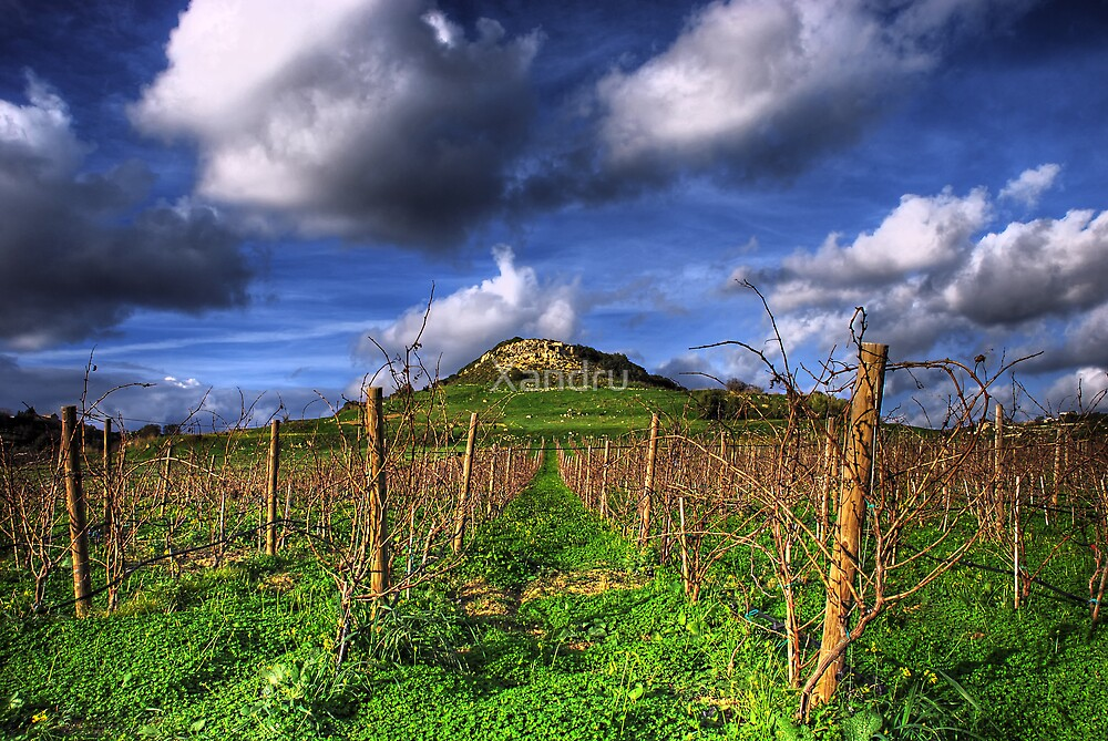 A Vineyard In Autumn  by Xandru