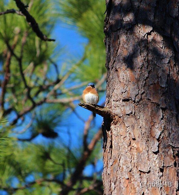 Bluebird On Little Branch by Cynthia48