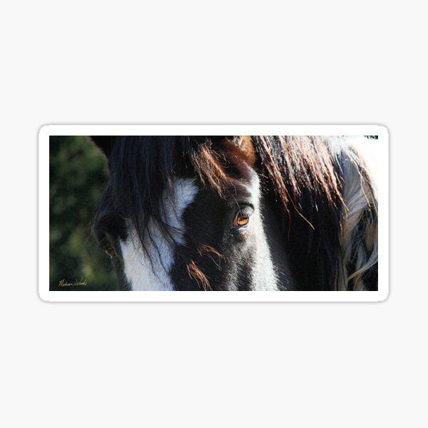 Comanche's Eyes Sticker