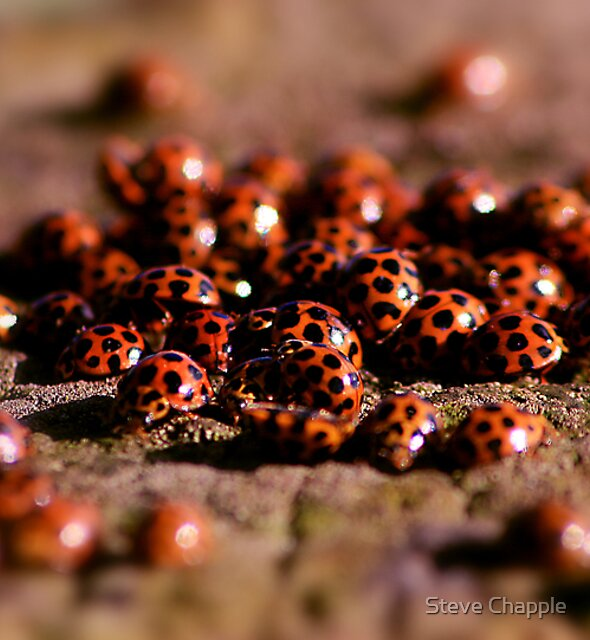 Ladybird Meeting place by Steve Chapple