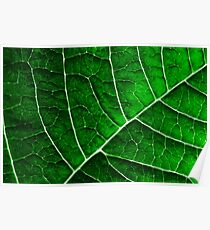 LEAF STRUCTURE GREENERY Poster