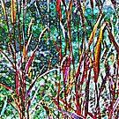 Dotty Autumn Grasses by Dana Roper