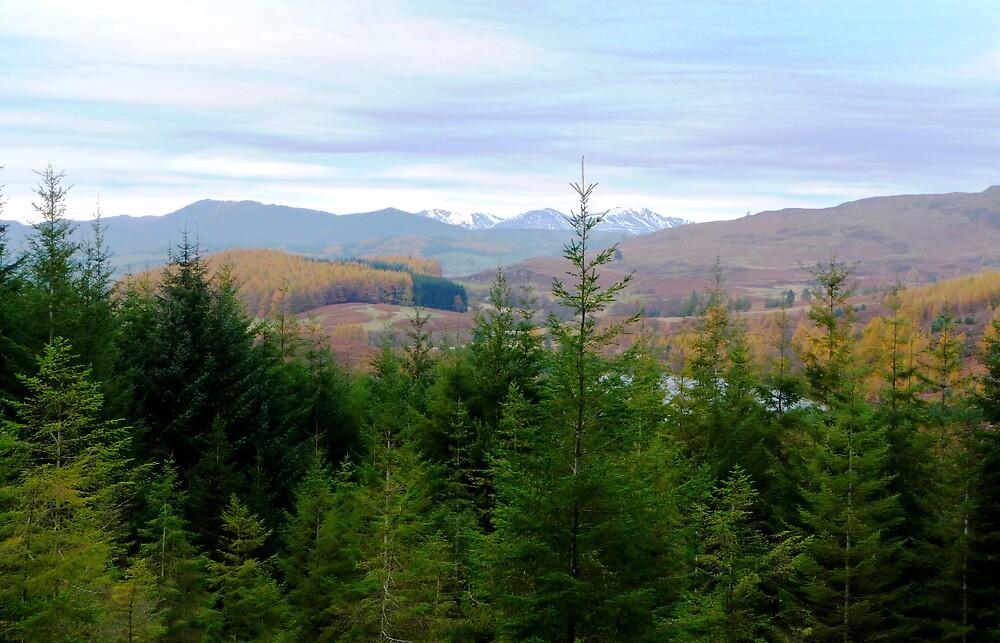 Fir Tree View by Braedene