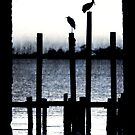 Harmony by Jonicool