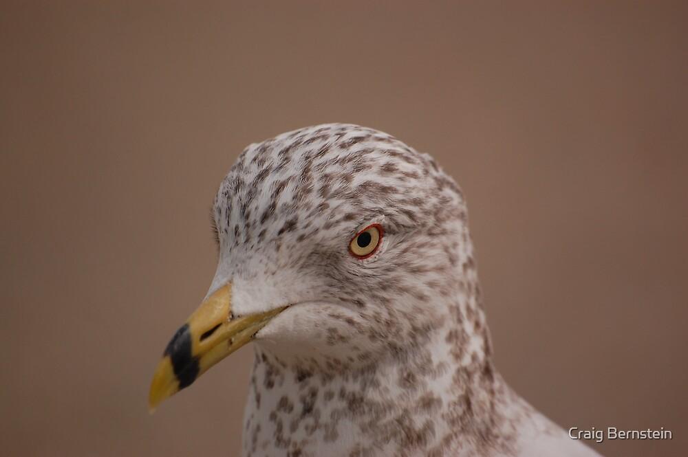 Eye of the Gull by Craig Bernstein