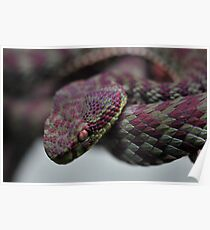 Snake (Viper) Poster