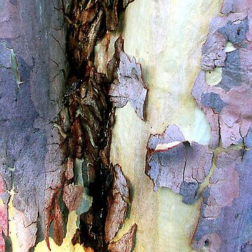 Bark abstract by rozmcq