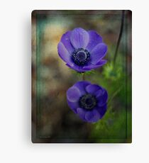 A Pair of Anemones Canvas Print