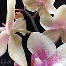 © Dr.A.Goszcz. Do you love flowers .  no.2. by © Andrzej Goszcz,M.D. Ph.D