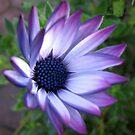 Traumblume - schönes blaues Bokeh von BlueMoonRose