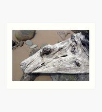 Weathered Tree Art Print