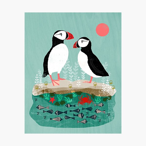 Puffins - Pair of Seabirds, Ocean, Sea Life, Coastal Art by Andrea Lauren Photographic Print