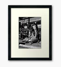 Shearing Framed Print