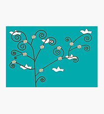 Doves in a tree Photographic Print