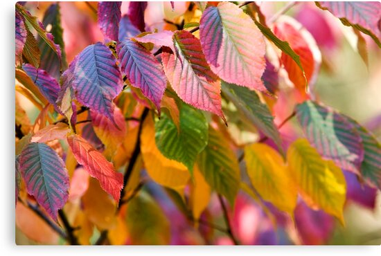 multicolored autumn leaves by vkph