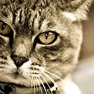 cat close & personal by Pip Gerard