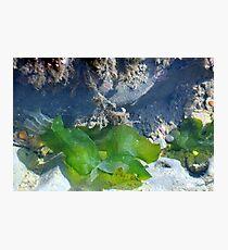 Soft Greens beneath the Sea at Lyme, Dorset UK Photographic Print