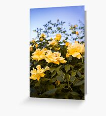 In the midst of yellow roses Greeting Card
