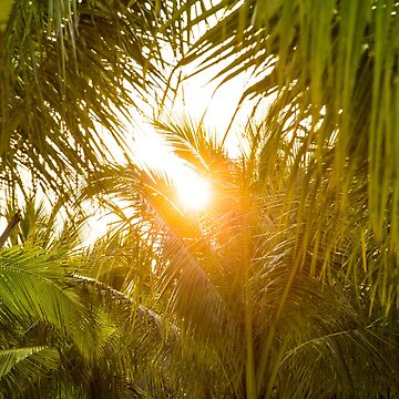 The sun breaking through palm trees by clemphoto