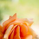 Delicate petals by Delphine Comte