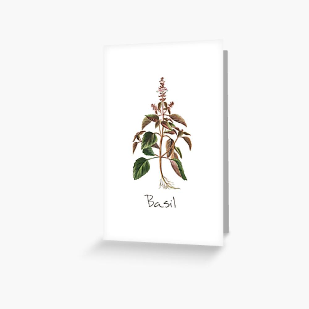 Basil Herb, Basil Print, Basil Plant, Basil Art Print Greeting Card